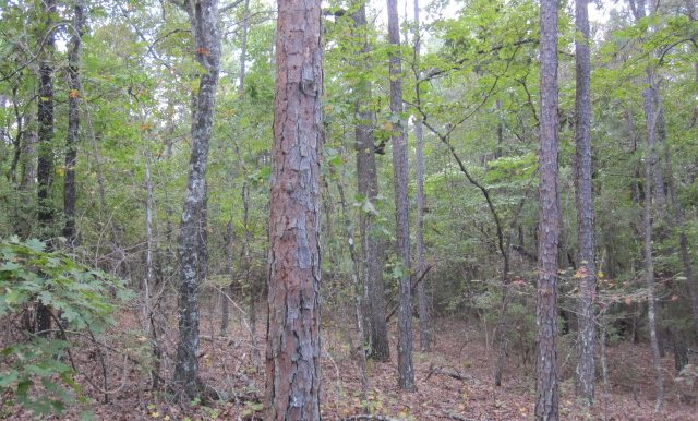 45+/- Acres Elmore County